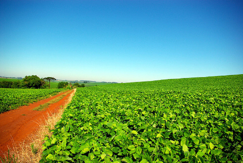 soybean plantation brazil