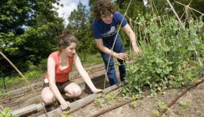 duke community garden