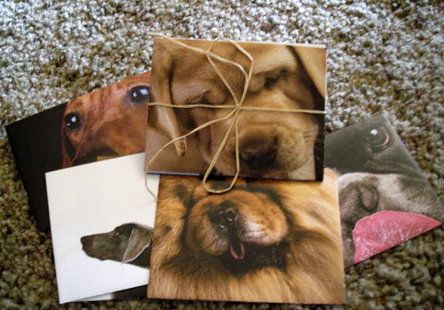 dog envelopes
