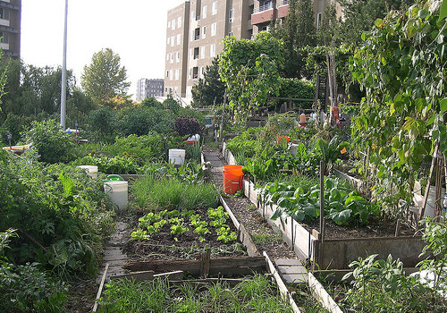 seattle community garden
