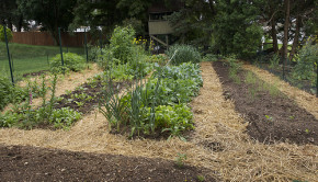 raised bed garden2