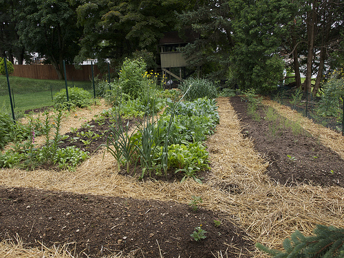 The Easiest Way To Grow Your Own Potatoes Sustainablog