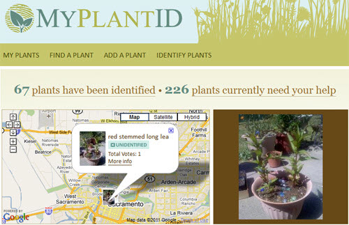 my plant id