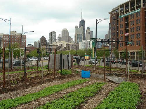 urban farming in chicago: city farm
