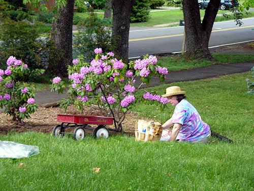 a solitary gardener