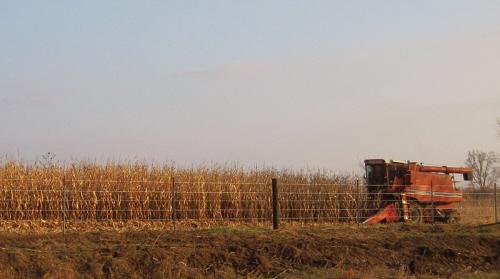 harvesting corn in iowas