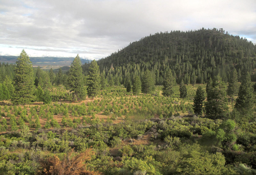 reforestation project oregon
