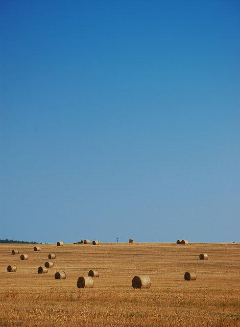 dry russian hay field in 2010