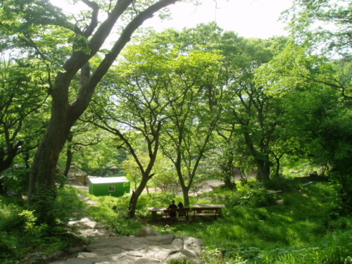 national park forest land in south korea