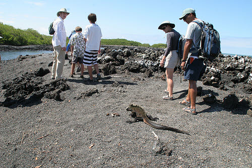 a tour group on  Las Tintoreras Island in the Galapagos