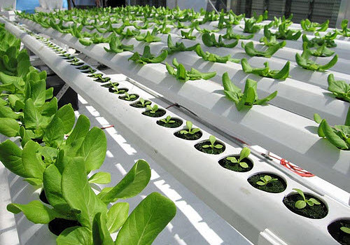 bright-farms-hydroponic-system