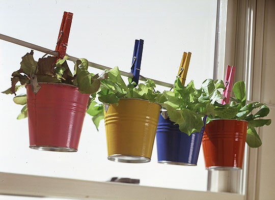 container gardening in small buckets