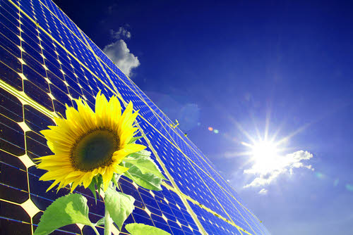solar panel sunflower
