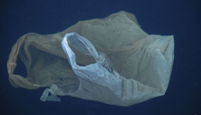 plastic bag in water