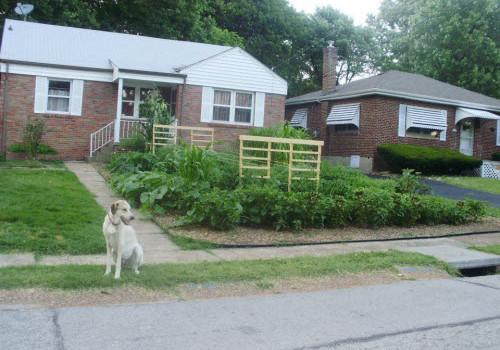 front yard garden feruson missouri 2