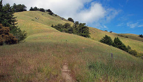 marin county grasslands
