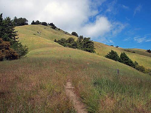 grasslands in marin county california