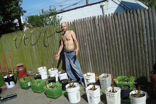 backyard container garden in brooklyn