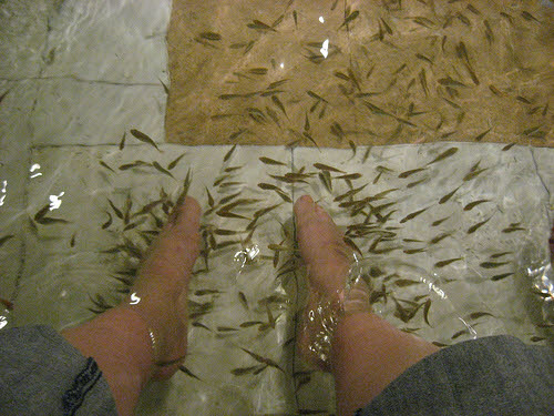 Fish pedicures worth the risks for Fish eat dead skin spa