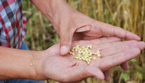 seeds in farmers hand