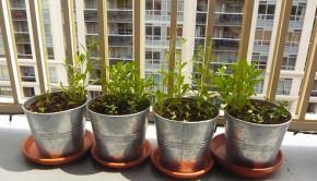container garden aluminum pots