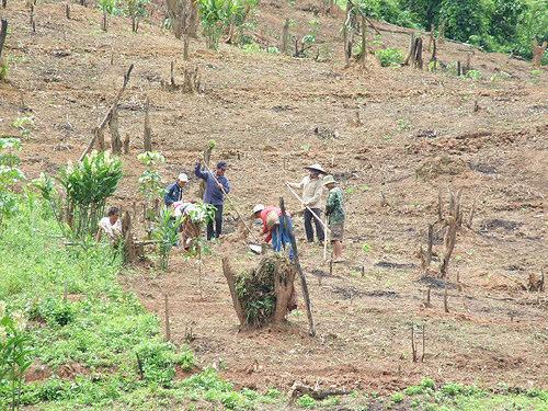 deforestation in laos