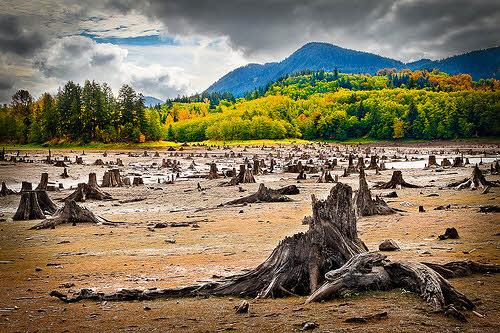 deforestation in washington state