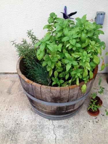 reused wine barrel planter