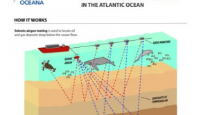 seismic airgun testing infographic