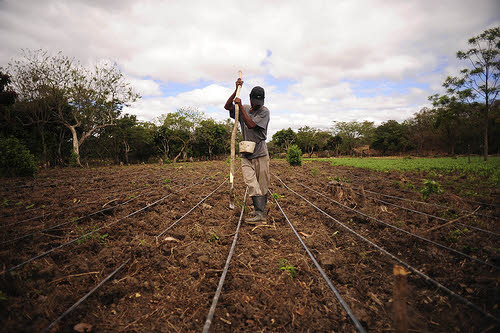 farming beans during a drought in nicaragua