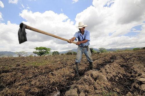 a farmer hoeing his drought-stricken field