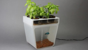 home aquaponics kit