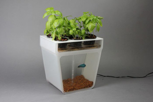 home aquaponics kit from back to the roots