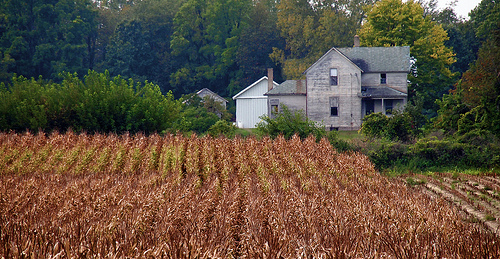indiana corn farm during 2012 drought