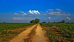 soybean fields texas