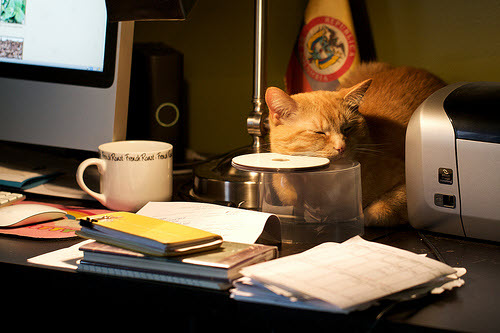 work at home desk with cat