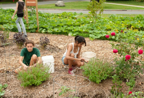 permaculture garden at umass amherst