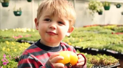 little boy in a garden