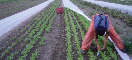 local sustainable food awakening