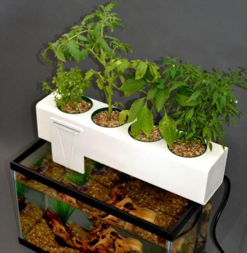 blue green box aquaponics system