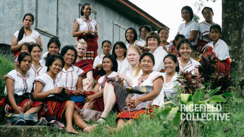 ricefield collective knitters