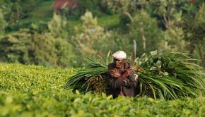 subsistence farmer kenya