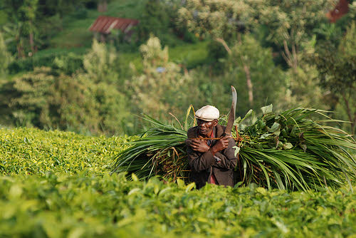 subsistence farmer in kenya