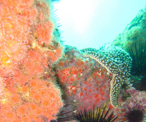 marine protected area wildlife