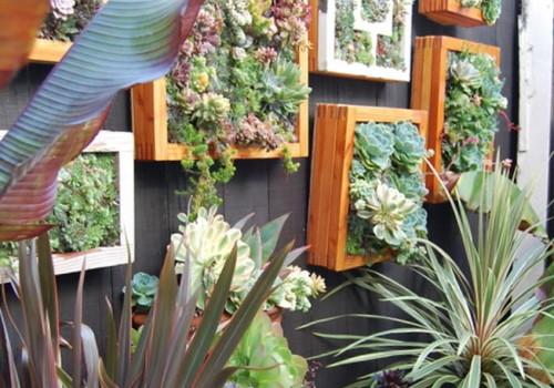 succulent vertical gardens wall