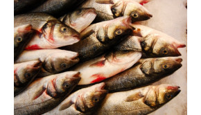 fisheries and aquaculture facts