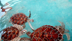 giant sea turtles