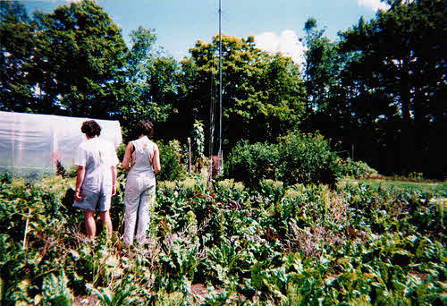organic gardening is one way to put the environment first