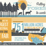 forests global climate change