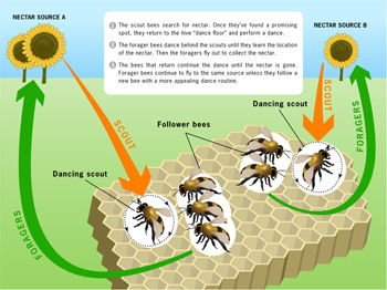 honey bees graphic